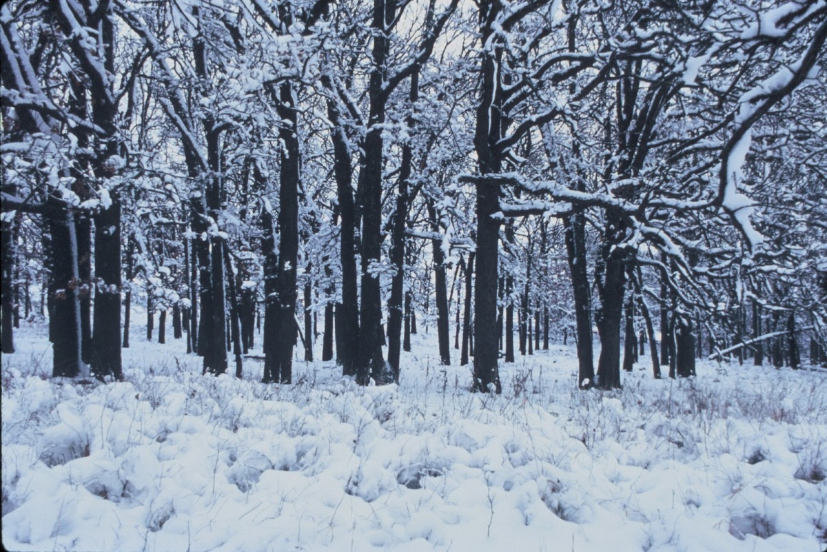 Death Amp Robert Frost S Stopping By Woods On A Snowy